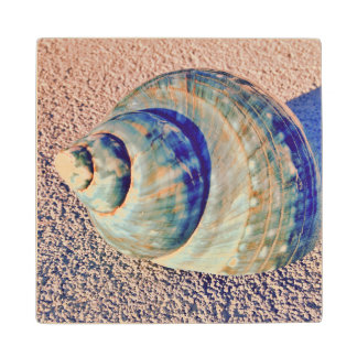 Sea Welk Seashell Wood Coaster