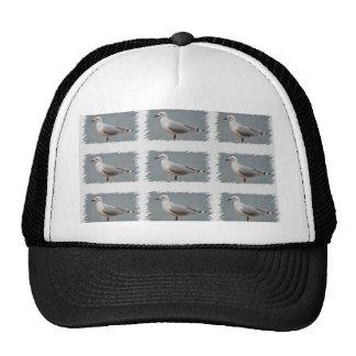 seabird art trucker hats