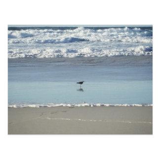 Seabird Postcard
