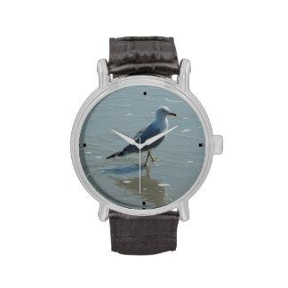 Seabird walking on beach watch