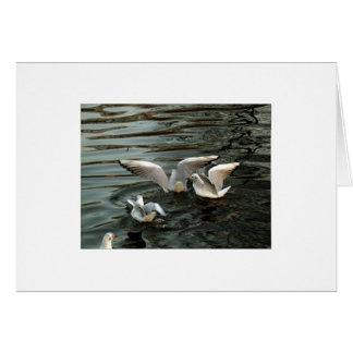 Seabirds Greeting Card