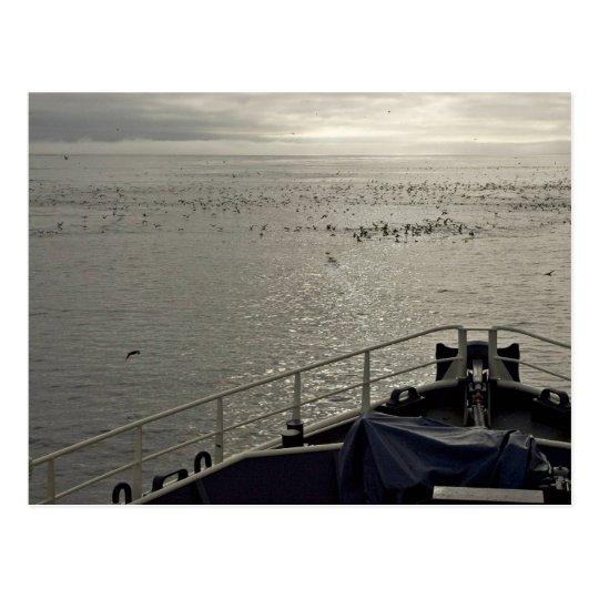 Seabirds off Tiglax bow near Chagulak Island Postcard