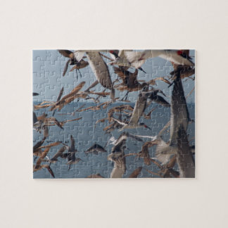 Seabirds Puzzle with Tin