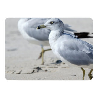Seagull 13 Cm X 18 Cm Invitation Card
