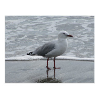 Seagull 2 postcard