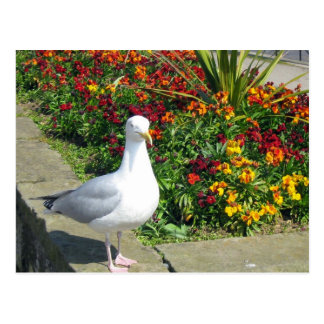 Seagull And Flowers In Whitby Postcard