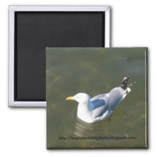 Seagull at Gosmans Dock in Montauk Magnet