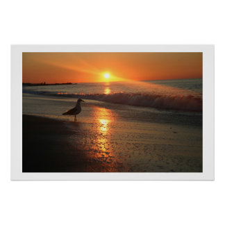 Seagull at Sunrise - Framed Print
