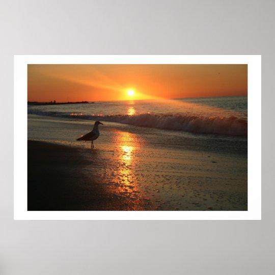 Seagull at Sunrise - Framed Print