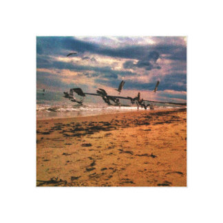 Seagull Beach Stretched Canvas Print
