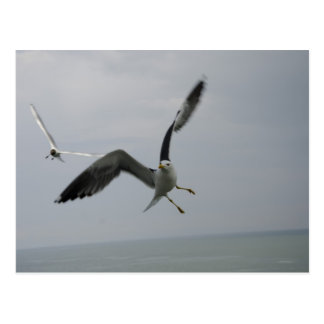 Seagull Bird Post Card