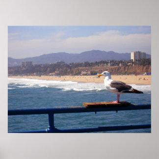 Seagull by Santa Monica Beach Posters