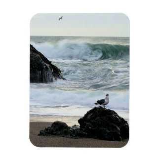 Seagull by the Sea Magnet