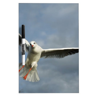 Seagull Dry Erase Board