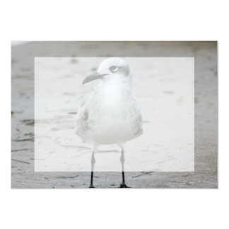 seagull eye level standing bird image in Florida Custom Invite