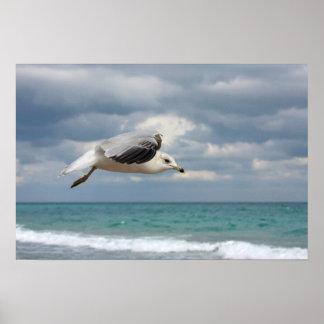 Seagull Flight Poster