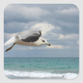 Seagull Flight Square Sticker