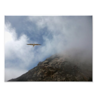 Seagull Flying by Morro Rock Photograph