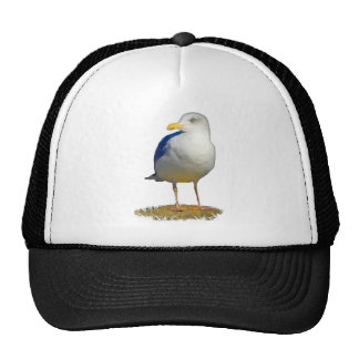 Seagull Got His Eye on You Trucker Hats