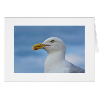 Seagull Greetings Card