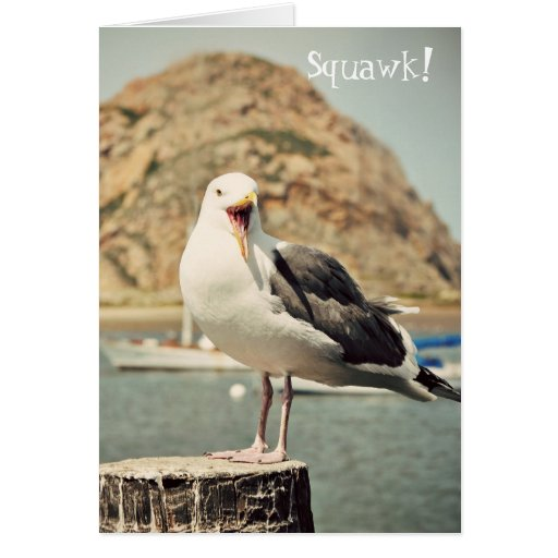 Seagull Happy Birthday Greeting Cards