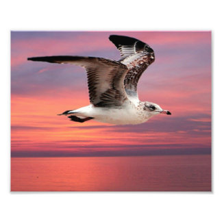 Seagull in beautiful flight photo print
