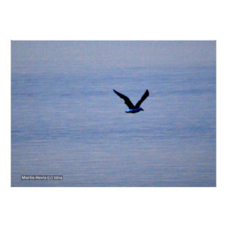 Seagull in Blue Poster