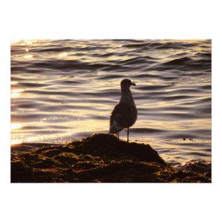 Seagull In Sunlight Custom Invite