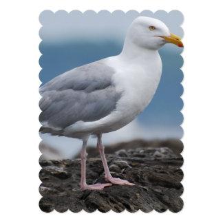 Seagull Announcements