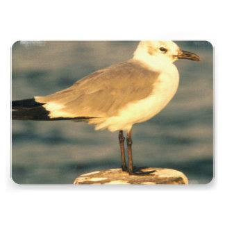 Seagull Personalized Invite