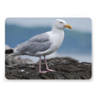 Seagull Announcement