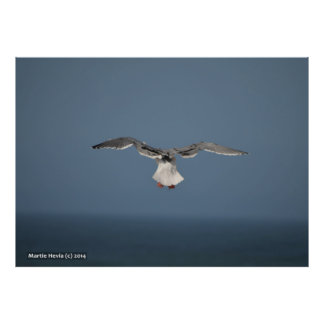 Seagull Leaves Poster