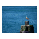 Seagull Looking at Ocean