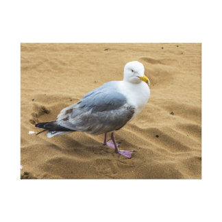 Seagull on a beach canvas print