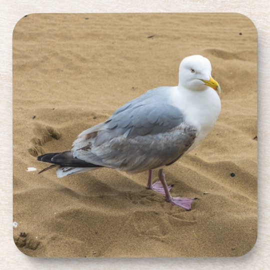 Seagull on a beach hard plastic coasters