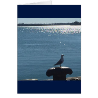 Seagull on a sparkling harbor card
