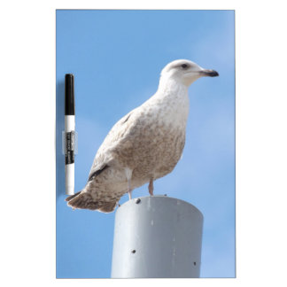 Seagull on pole dry erase board