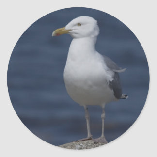 Seagull On Rock Classic Round Sticker