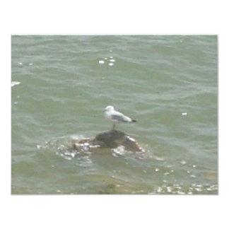 Seagull on rock custom invitation