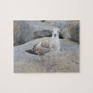 Seagull on Rocks Jigsaw Puzzle