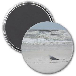 Seagull on the Beach Magnet