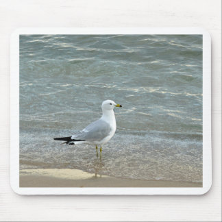 Seagull on the Beach Mouse Pad