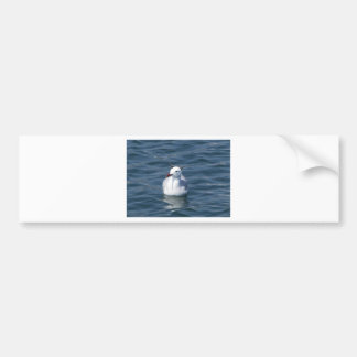Seagull on the water bumper sticker