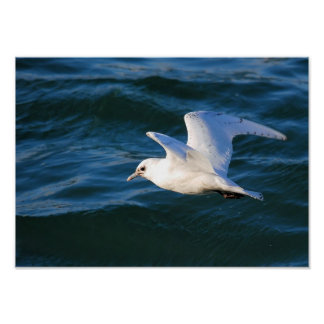 Seagull On The Water Poster