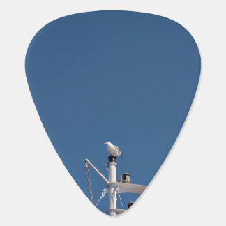 Seagull perched on pole plectrum