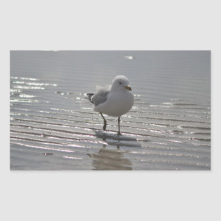 Seagull photo rectangular sticker
