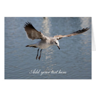 Seagull Photography Greeting Cards
