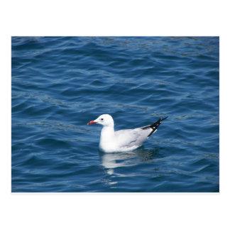 Seagull Post Card