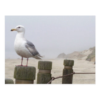 Seagull Post Card