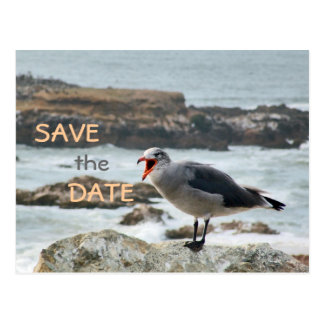Seagull Save the Date Postcard